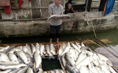 Phạt công ty làm cá chết trên sông Bưởi 480 triệu đồng
