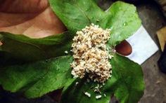 Lên Bắc Giang ăn đặc sản trứng kiến