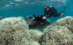 Hơn 1/3 rạn san hô Great Barrier của Australia bị phá hủy