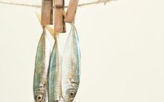 Chuyện con cá và phenol