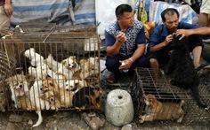 Bị phản đối, lễ hội thịt chó ở Trung Quốc ảm đạm