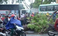 Dông lốc tại Sài Gòn, cây bật gốc đè người đi đường