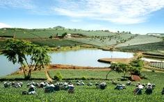 Xây dựng Lâm Đồng thành vùng kinh tế động lực Tây Nguyên