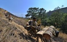Nông dân phải là lực lượng chính trong bảo vệ rừng