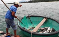 Yêu cầu làm rõ nguyên nhân cá bớp chết