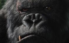 Kong cán mức 104 tỉ đồng sau một tuần ra rạp Việt