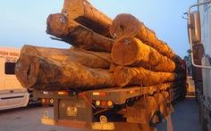 Hai xe chở gỗ khủng bỏ chạy trước mặt lực lượng chức năng