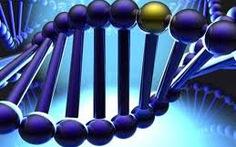 """Vụ bốc mộ, thân nhân không biết"""": Giám định ADN"""