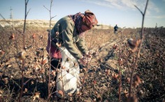 Lao động nô lệ có ở khắp thế giới