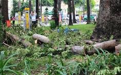 Cành cây gãy rơi gây trúng đầu người dân trong công viên