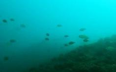 Xem clip cá trở về đáy biển Nhân Trạch