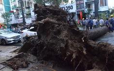 9 ngày 65 cây ở Sài Gòn đổ đè người