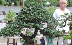 Mãn nhãn với bonsai, cây cảnh, gỗ lõi, ngoạn thạch ở Phố Hội