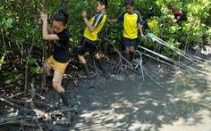 Giữ rừng ngập mặn Cần Giờ để giữ đa dạng sinh học