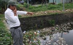 Cá chết trắng hồ Hòa Khê, Đà Nẵng