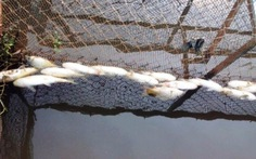Lấy mẫu kiểm tra cá chết bất thường ở sông Bùng