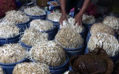 Bắt cơ sở sản xuất giá đỗ bằng hóa chất tại Đồng Nai