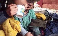 Cậu bé 3 tuổi sống sót 3 ngày trong rừng hoang