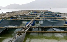 Cứu người trên bè cá bị lũ cuốn ra biển