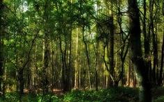 """Phát hiện hơn 30 loài thực vật mới tại """"đất nước kênh đào"""""""