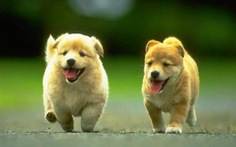 Nguy cơ nhiễm sán chó từ thú cưng