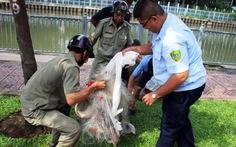 Săn bắt cá chuyên nghiệp trên kênh rạch TP.HCM: Khó xử phạt?