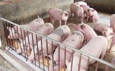 Dừng nhập thức ăn chăn nuôi chứa chất kích thích từ 1-10