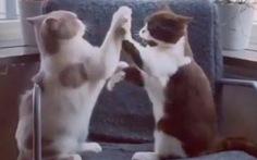 Xem mèo chơi tròvỗ tay theo nhịp