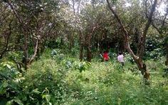 Xô xát 3 người chết: bắt một nghi can đang trốn trong rừng