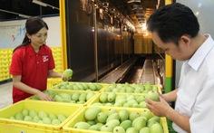 Hàn Quốc đầu tư trồng xoài hữu cơ tại Đồng Tháp
