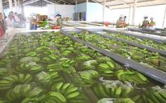 Làm gì để thay đổi diện mạo rau quả Việt Nam trên thị trường quốc tế ?