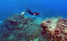 """Rạn san hô khổng lồ của Úc đang bị """"nấu chín"""""""