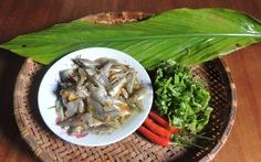 Xốn xang cá trũ sông Thu Bồn mùa nước lũ