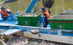 Kênh Nhiêu Lộc - Thị Nghè: Đề nghị ngưng thả 3 loài cá