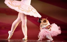 Cô chó tật nguyền múa ballet cùng diễn viên múa chuyên nghiệp