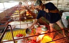Thời của chăn nuôi sạch