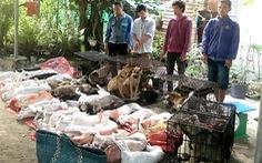 Tây Ninh triệt phá đường dây trộm chó chuyên nghiệp