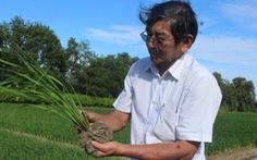 Gạo Việt đừng mải mê tăng sản lượng