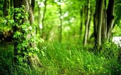 Thêm 1200 tỷ đồng cho phát triển rừng