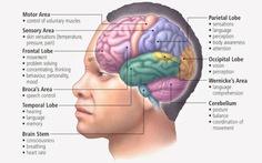 Não, đầu gối... cũng có bộ phận mới được phát hiện gần đây