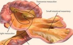 Cơ quan màng treo ruột làm gì?