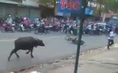 Clip trâu điên húc người trên đường phố Biên Hòa