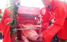 Lễ hội chém lợn: chỉ đâm son giết thịt làm cỗ bình thường