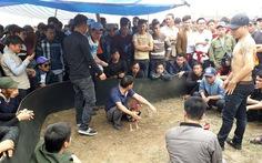 Đá gà đỏ đen bạc triệu công khai tại hội Lim