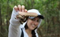 Vợ chồng vào rừng Amazon khám phá những côn trùng kỳ dị