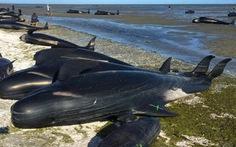Lo xác cá voi phát nổ,New Zealand đóng cửa bãi biển