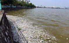 Hà Nội dừng toàn bộ việc nuôi cá ở Hồ Tây