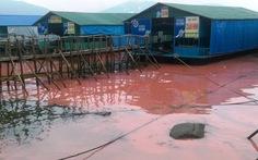 Vệt nước đỏ ở Vũng Áng là thuỷ triều đỏ
