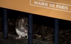 Paris chi 1,5 triệu euro chống... chuột