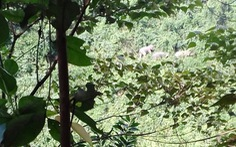 Thành lập khu bảo tồn sinh cảnh voi Quảng Nam
